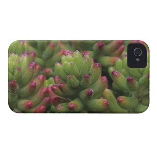 Sedum plant, Arizona-Sonora Desert Museum, iPhone 4 Case-Mate Case
