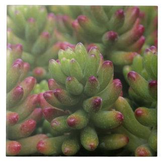 Sedum plant, Arizona-Sonora Desert Museum, Ceramic Tile