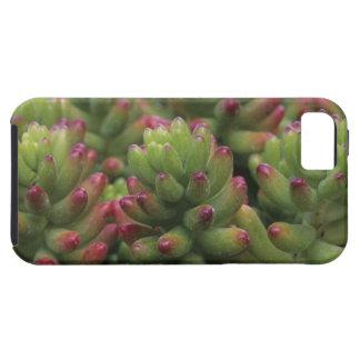 Sedum plant, Arizona-Sonora Desert Museum, iPhone SE/5/5s Case