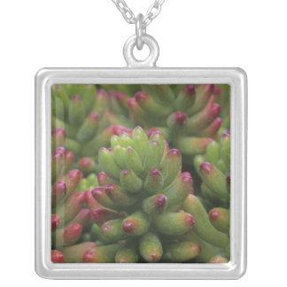 Sedum plant, Arizona-Sonora Desert Museum, Square Pendant Necklace