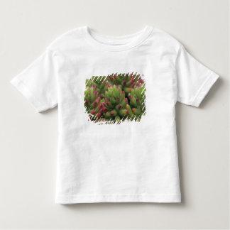 Sedum plant, Arizona-Sonora Desert Museum, T Shirt