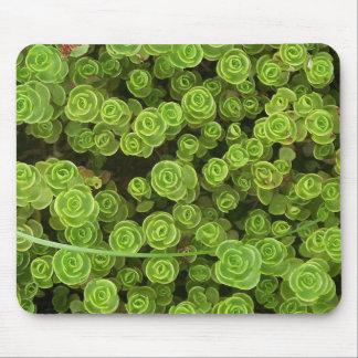 Sedum verde Mousepad 2 Alfombrilla De Ratones
