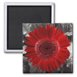 see red 2 inch square magnet