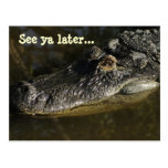 See ya later... alligator postcard