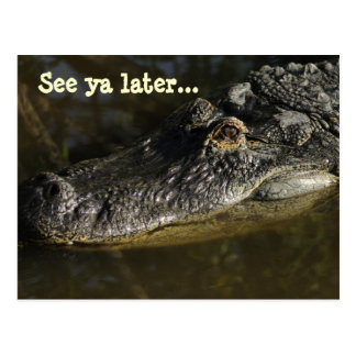 See ya later... alligator postcard