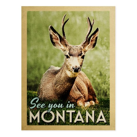 See You In Montana - Stag Deer Wildlife Postcard