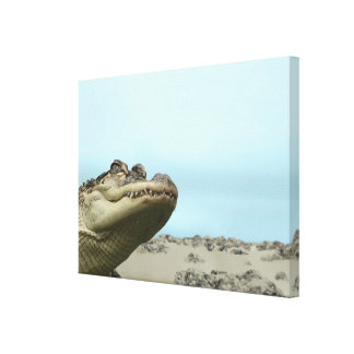 See You Later Alligator Canvas Print