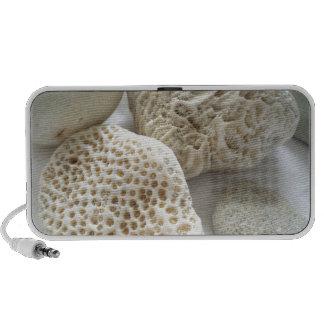 Seea shells and stones Doodle Speakers