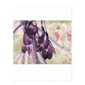 Seed Clusters Postcard
