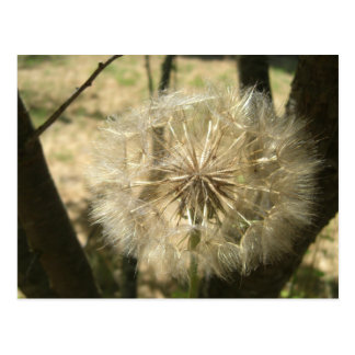 Seed Globe Tree Notes Card