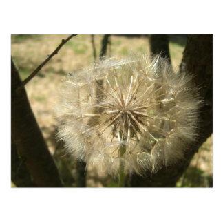 Seed Globe Tree Postcard