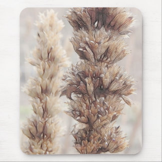 Seed Head - Agastache Mouse Pad