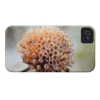 Seed Head - Bee Balm iPhone 4 Cover