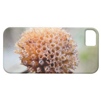 Seed Head - Bee Balm iPhone SE/5/5s Case