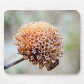 Seed Head - Bee Balm Mouse Pad