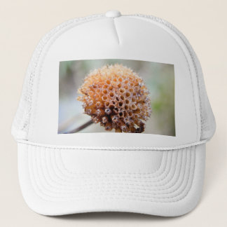 Seed Head - Bee Balm Trucker Hat