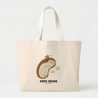 Seed Inside (Dicotyledon Bean Seed Anatomy) Bag