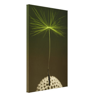 Seed Of A Dandelion Photo on Canvas