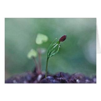 Seed of Love Card