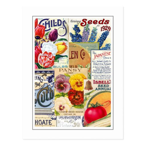 Seed Packets Post Card