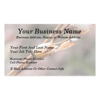 Seed Pod - Nicotiana Business Card