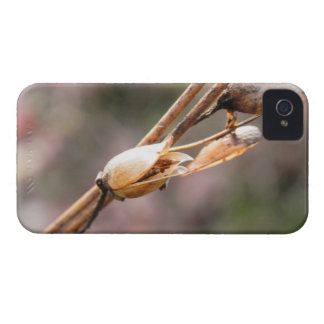 Seed Pod - Nicotiana Case-Mate iPhone 4 Case