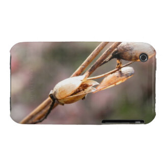 Seed Pod - Nicotiana iPhone 3 Case-Mate Case