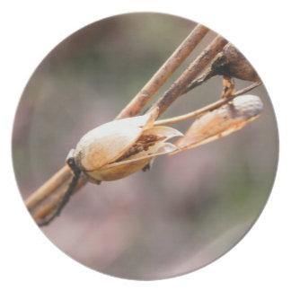 Seed Pod - Nicotiana Plate
