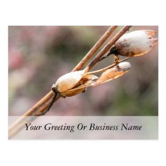 Seed Pod - Nicotiana Postcard