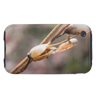 Seed Pod - Nicotiana Tough iPhone 3 Cover