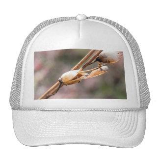 Seed Pod - Nicotiana Trucker Hat