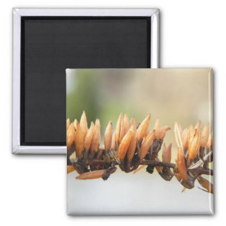 Seed Pods - Butterfly Bush 2 Inch Square Magnet
