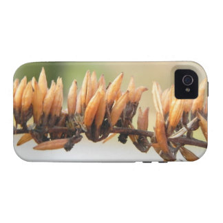 Seed Pods - Butterfly Bush iPhone 4/4S Covers