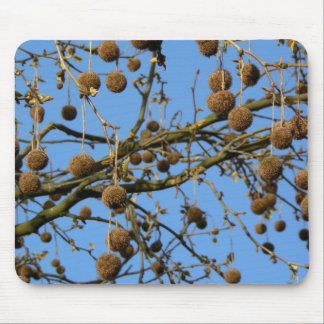 Seed Pods - London Plane Tree Mouse Pad
