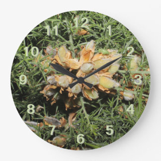 Seed Pods with Small Green Insect. Clocks