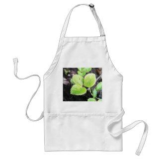 Seedling - Hellebore Adult Apron