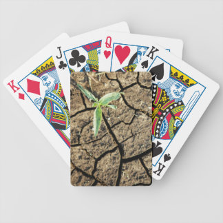 Seedling In Cracked Earth Bicycle Playing Cards