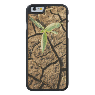 Seedling In Cracked Earth Carved Maple iPhone 6 Slim Case
