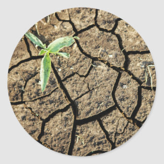 Seedling In Cracked Earth Classic Round Sticker