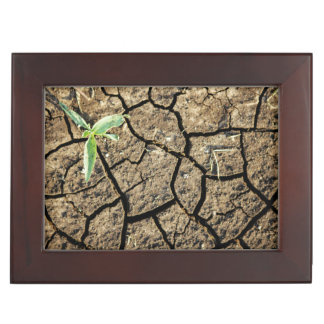 Seedling In Cracked Earth Memory Box