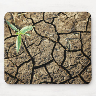 Seedling In Cracked Earth Mouse Pad