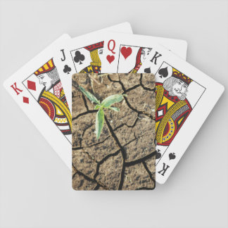 Seedling In Cracked Earth Playing Cards