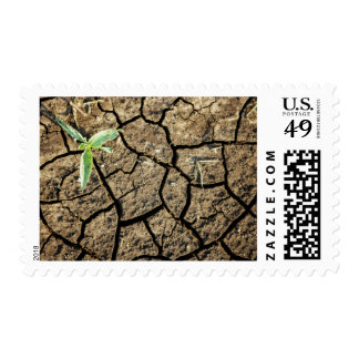 Seedling In Cracked Earth Postage Stamps