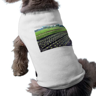 Seedlings with little growth pet clothes