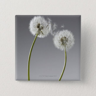 Seeds connecting two dandelions pinback button