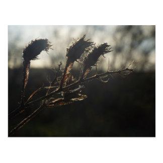 seeds of everlasting postcard