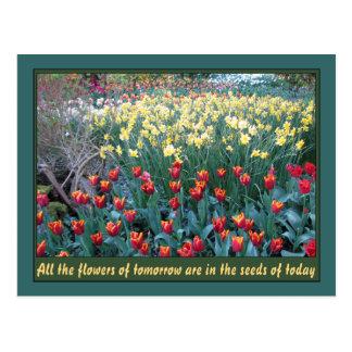 Seeds of Tomorrow Postcard
