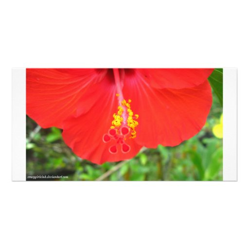Seedz Picture Card