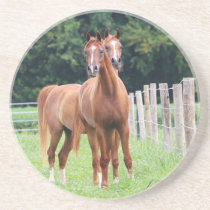Seeing Double- BOGO Colts Sandstone Coaster