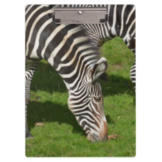 Seeing Double Zebras Clipboard